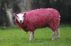 Irlanda in rosa per le 3 tappe del Giro d'Italia 2014